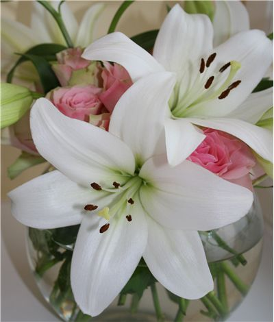 Picture Of Beautiful Lilly Scent